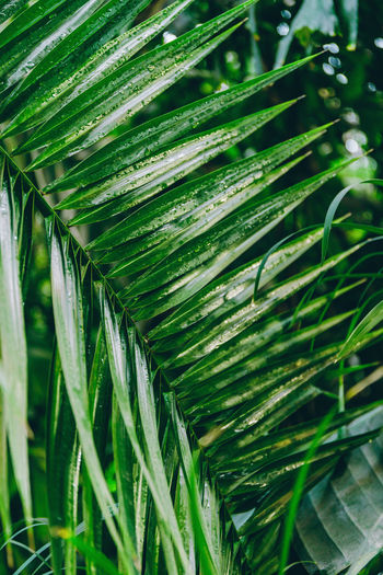 Green Color Growth Plant Leaf Plant Part Beauty In Nature Nature Close-up Day No People Selective Focus Focus On Foreground Outdoors Freshness Natural Pattern Palm Leaf Grass Tranquility Tree Botany Leaves Blade Of Grass