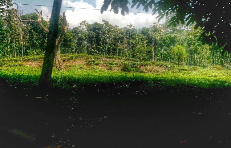 Eyem Nature Lover Nature Landscape Hills Flora Ciater Plants Forest Jungle