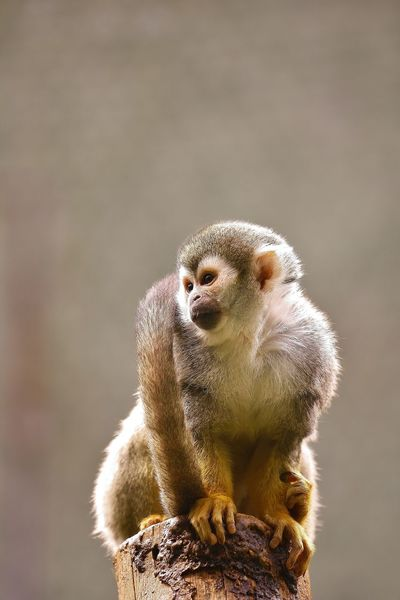 Animal Themes Animal Wildlife Animals In The Wild Baboon Close-up Day Mammal Monkey Nature No People One Animal Outdoors Sitting