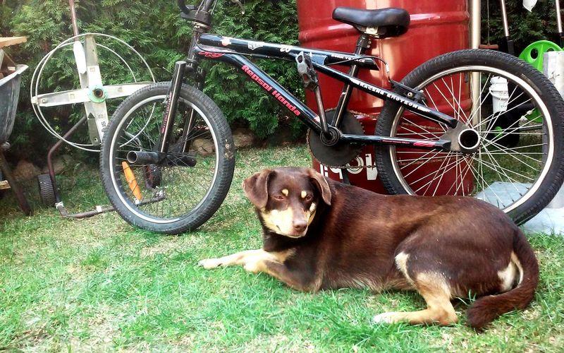 Puppy❤ Bike