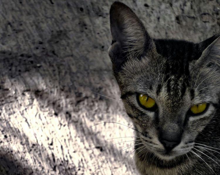 Homeless Cats Eyes Cat Check This Out EyeEm Animal Lover Light And Shadow