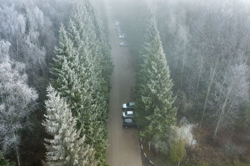 High angle view of pine trees during foggy weather
