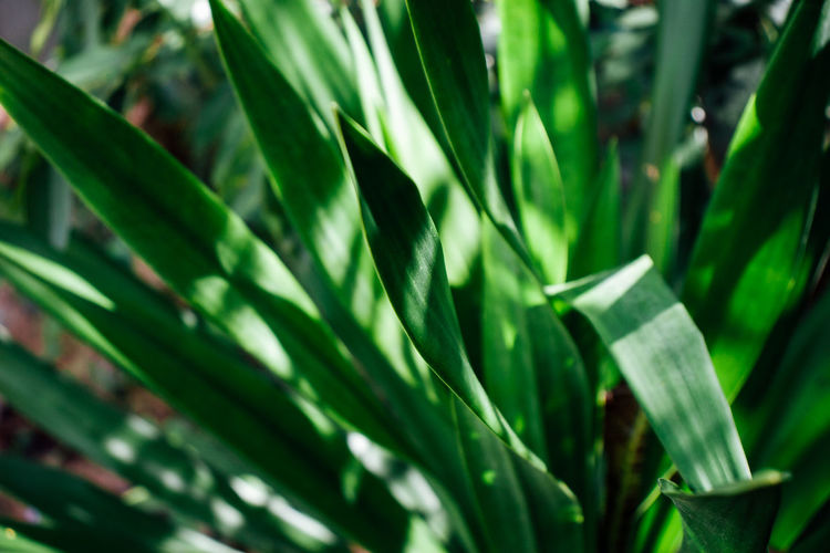 Growth Green Color Plant Beauty In Nature Plant Part Leaf Close-up Nature Day No People Tranquility Land Focus On Foreground Full Frame Backgrounds Outdoors Freshness Field Sunlight Selective Focus Blade Of Grass Bamboo - Plant