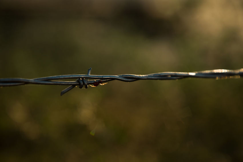 life on a barbed wire Spider Barbed Wire Close-up Day Focus On Foreground Metal No People Outdoors Protection Razor Wire Safety Security Spiked Strength