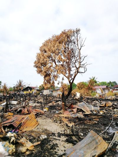 Nothing left. Burnt Burned Burn Burnt Trees EyeEm Nature Lover EyeEm Selects
