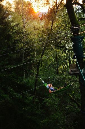 Tree Forest Tranquility Tranquil Scene WoodLand Nature Green Color Sunset AboveTheGround Life Inthetrees Highropescourse View GreatAtmosphere Hanging Chilling Chill Mode Enjoying Life Enjoy