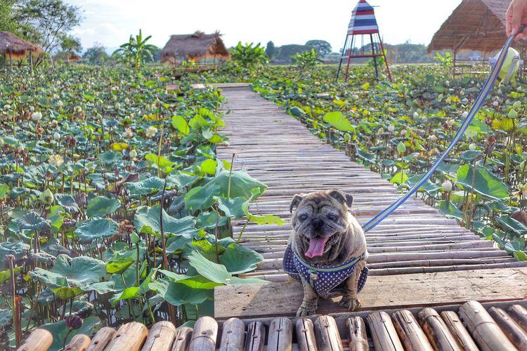 Dog amidst plants