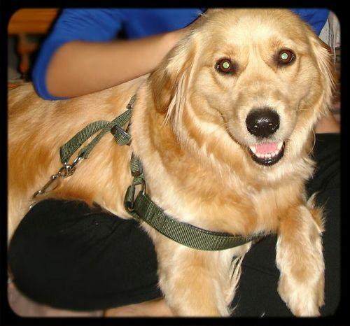 Dogs Dogstagram Lasy Ilovedogs