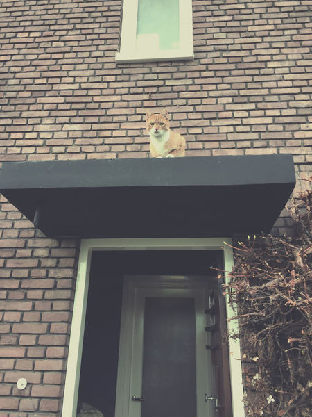 Red cat sitting on a roof above an open entrance door Animal Themes Architecture Cat Funny High Looking At You Low Angle View No People One Animal Outdoors People Red Roof Sitting