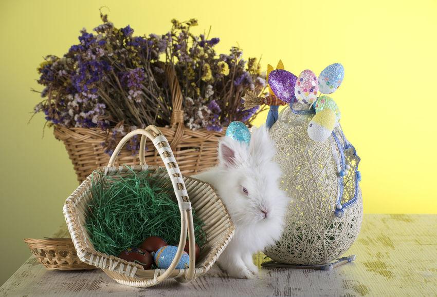 Bunny 🐰 Easter Easter Bunny Easter Egg Easter Ready Easter Basket  Easter Eggs Easter Decoration