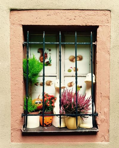 Window Decoration Urbanphotography Fall Still Life Pumpkin IPhoneography