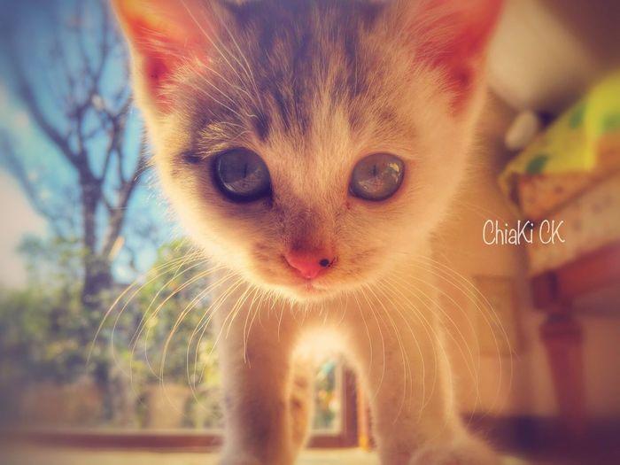Animals Cat Cute Cat Cute Cat.  My Cat My Pets Cute Cats Cute Pets