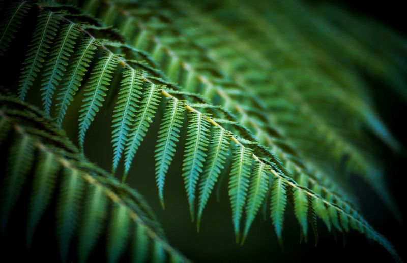 Close-Up Of Fern