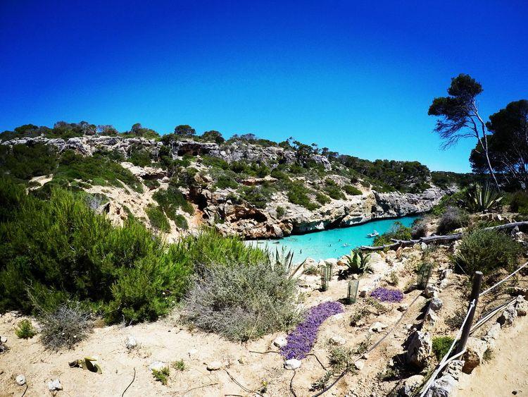 Mallorca Calodesmoro