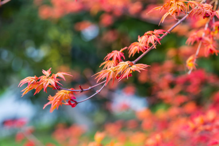 Red leaves on