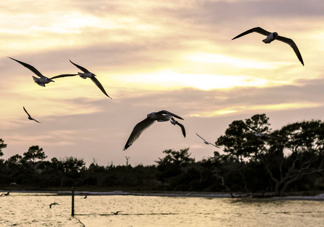 Animal Themes Animal Wildlife Animals In The Wild Beauty In Nature Bird Cloud - Sky Flying Nature Outdoors Scenics Seagulls Sunset Tadaa Community Tranquility Water