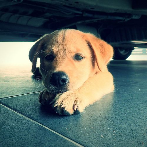 Hmmm dont bother me, i just thinking story of my life Puppy Dog Thinkingdog Brown Olympus Cute