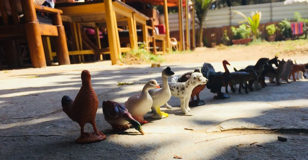 Farm animals on