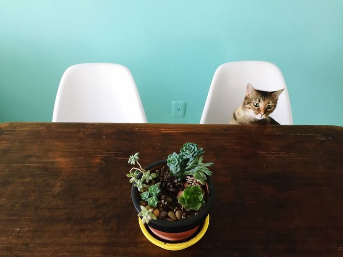 Indoors  Potted Plant Table Plant Cat Domestic Cat Green Color Domestic Animals Domestic Life Freshness Wall - Building Feature Houseplant