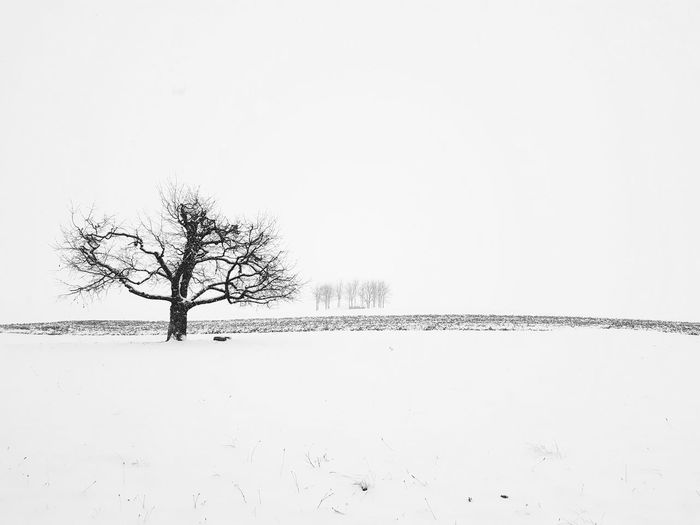 Winter Landscape Winter Snow Tree Bare Tree No People Landscape Outdoors Rural Scene Day Sky