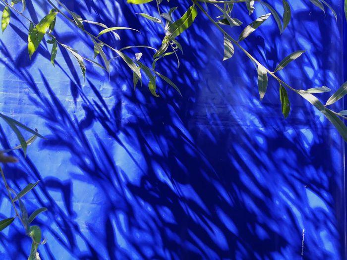 🐳BLUE🐳 Blue