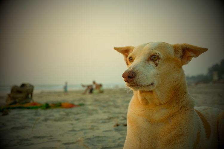 lonely dog at the beach One Animal Mammal Domestic Animal Animal Themes Pets Domestic Animals Canine Dog Vertebrate No People Nature Dogphotography Sun LonelyDog Beachdog Streetdog
