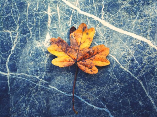 Autumn Leaf Change Nature Outdoors Beauty In Nature Day Fragility No People Close-up Dried Plant Wilted Plant Yellow Rotting Hello EyeEm✌ Getting Inspired EyEmNewHere The Week On EyeEm EyeEm Best Shots - Nature Capture The Moment EyeEm Selects Beautiful Nature EyeEm Gallery EyeEm Best Shots EyeEm Masterclass