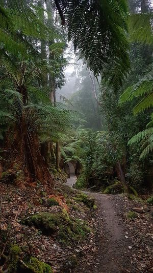 Rainforest, Three Capes Track, Tasman Natl Park, Tasmania #NoFilter #Nature  #EyeEmNewHere #likeforlike #likemyphoto #qlikemyphotos #like4like #likemypic #likeback #ilikeback #10likes #50likes #100likes #20likes #likere #eyembestshot #EyeEmSelects #eyeemphotography #EyeEm Nature Lover #eye4photography # Photooftheday #mountains #hiking #travelphotography #tranquillity #threecapestrack #tasmania #tasmannationalpark #Australia #rainforest #coolclimate #trees #mistymorning Water Sky Rainy Season Rainfall Wet