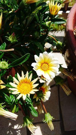 Photography 庭の花 土いじり