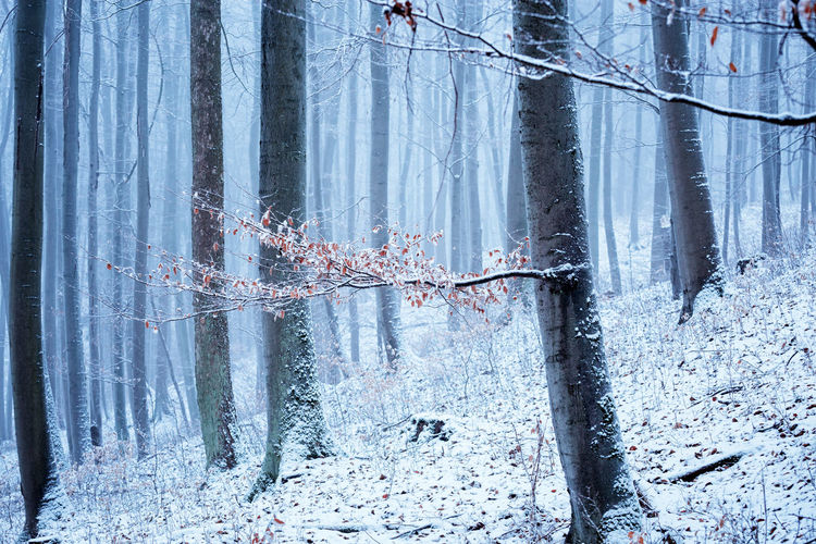 Winter Cold Temperature Snow Tree No People Plant Land Forest Nature Tranquility Day Beauty In Nature Trunk Tree Trunk Tranquil Scene Scenics - Nature Frozen Water Growth Outdoors Icicle