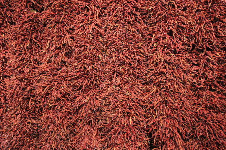 Close up of chili peppers Chengdu China ASIA Chili Peppers Chilly Red Spicy Spicy Food Spicies Backgrounds Full Frame No People Close-up