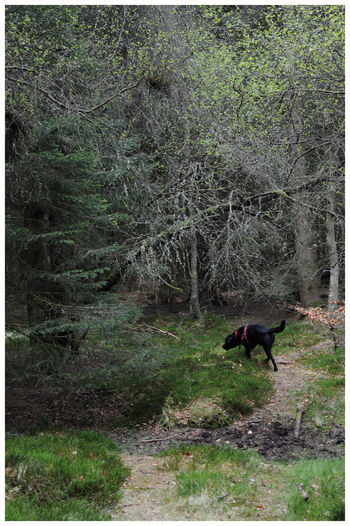 Fresh Green Foliage Beauty In Nature Outdoors Tree Textures Tree Trunk Forest Light And Shadow Forrest Walk Kirriemuir Countryside Kate's Wood Black Labrador Retriever Puppy