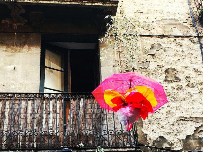 Taking Photos Flowers Girona Gironamenamora Colorsplash Girona Temps De Flors 2016