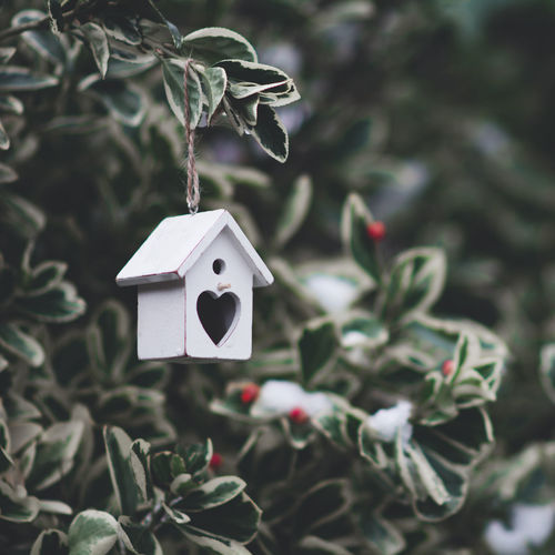 Close-up of birdhouse hanging on tree
