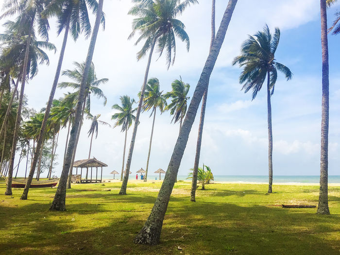 Palm and tropical beach. Beautiful nature landscape with Coconut Palm trees ASIA Palm Tree Terengganu, Malaysia Beauty In Nature Coconut Trees Day Grass Green Color Growth Nature No People Outdoors Palm Tree Scenics Sea Sky Tranquil Scene Tranquility Travel Destinations Tree Tree Trunk Water