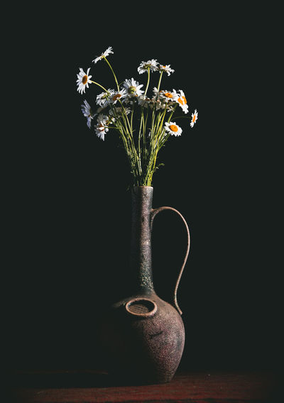 Chamomile Plant Vase Flower Flowering Plant Still Life Black Background Indoors  No People Close-up Copy Space Nature Studio Shot Vulnerability  Fragility Single Object Growth Freshness Beauty In Nature Flower Head Chamomile Stil Life