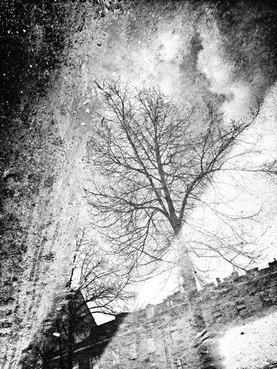 Reflection Puddle Black And White Rainy Days