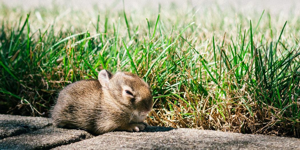 Baby Rabbit On Footpath