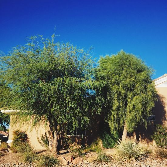 side by side Trees Arid Climate Other Desert Cities Track Homes Suburbia