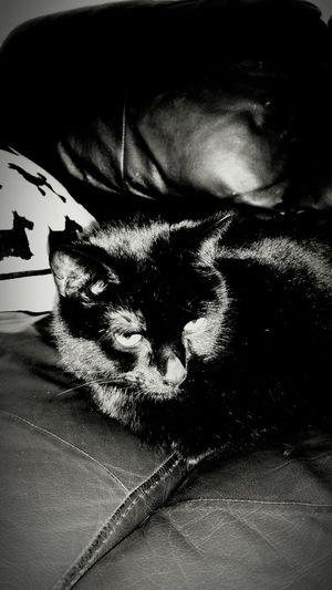 Love this cat.