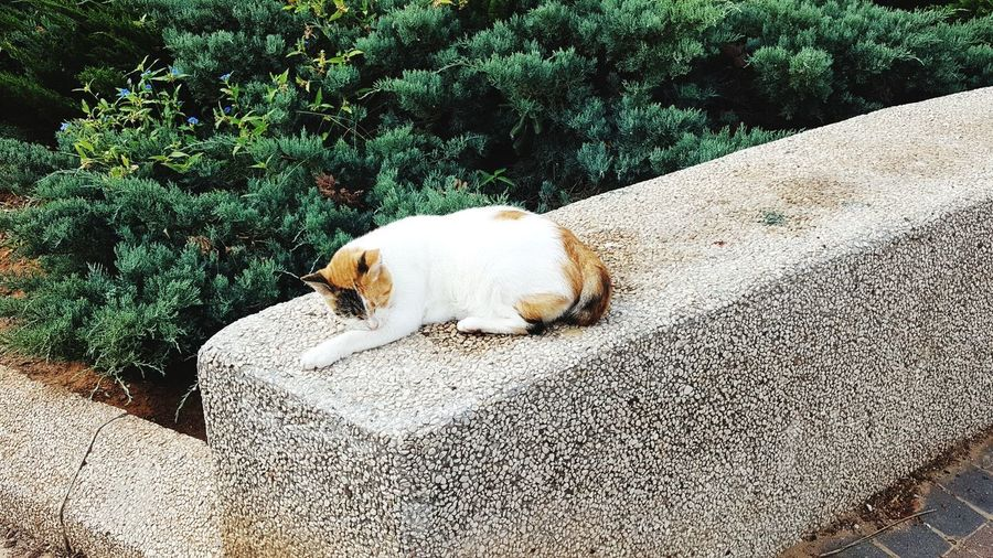 High angle view of a dog cat
