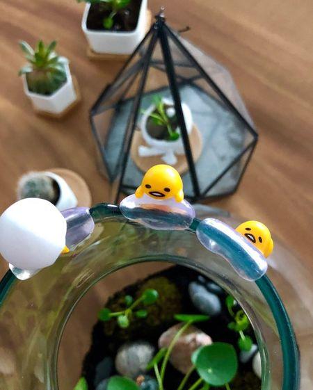 Gudetama Pilea Terrarium Gudetama🍳 Gudetama Close-up No People Focus On Foreground Animal Bird Plant Animal Themes Indoors  Yellow Day Selective Focus