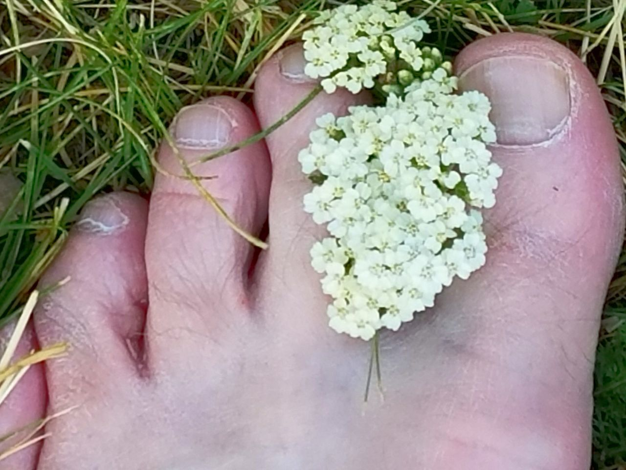 human body part, one person, real people, human hand, lifestyles, close-up, outdoors, leisure activity, low section, human leg, day, grass, freshness, people, adult, adults only