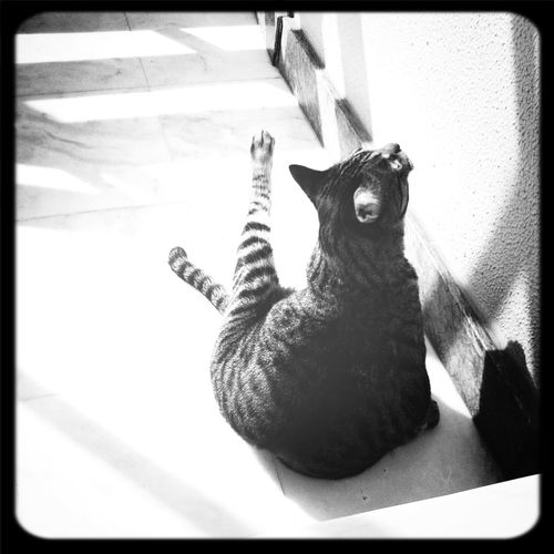 Yoga cat Cat Lovers Black And White Photography Eyem Nature Lovers