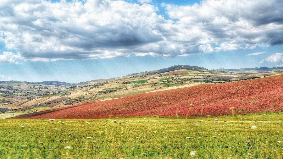 Rural Scene Agriculture Field Sky Landscape Cloud - Sky Cultivated Land Agricultural Field Patchwork Landscape Plowed Field Rice Paddy Terraced Field Ear Of Wheat
