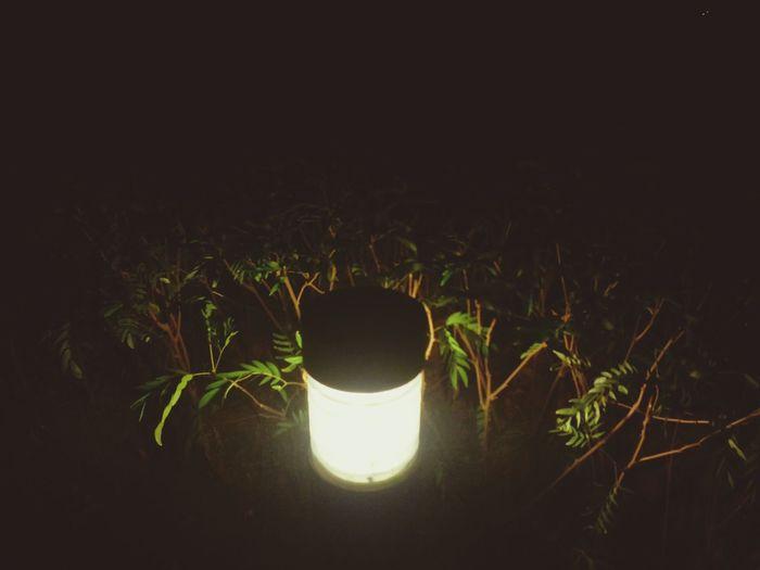 light up Meeting