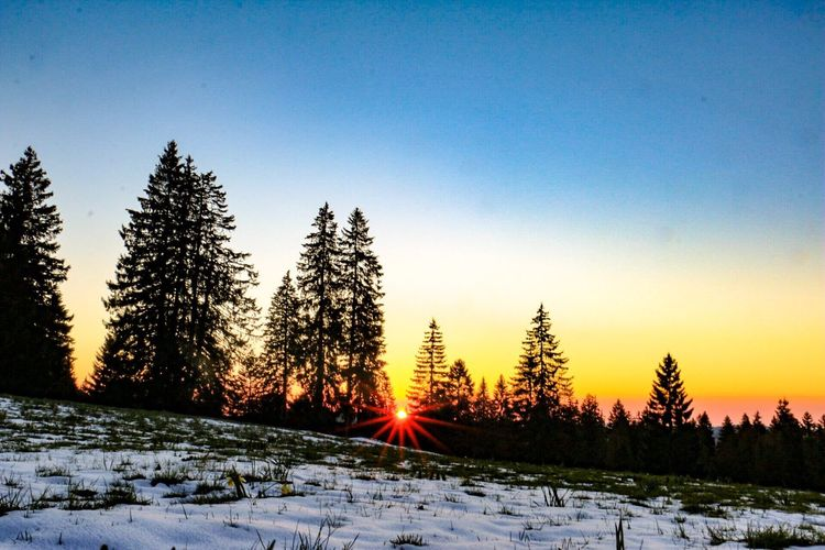 Nature Cold Temperature Beauty In Nature Tranquil Scene Sunset Clear Sky Tree Outdoors