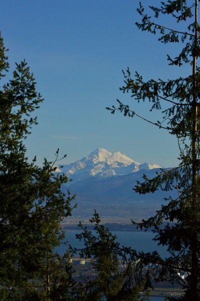 Blue Sky PNW Tree No People Mountain Scenics Nature_collection Mount Baker Washington State Snowcapped Mountain PNWonderland Peaceful Anacortes