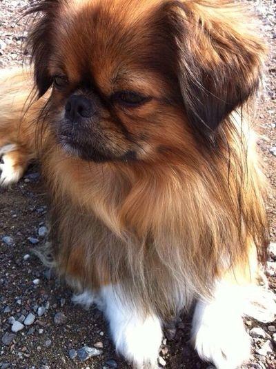 I Love My Dog<3 Cute♡ Sweet My Heart ♡