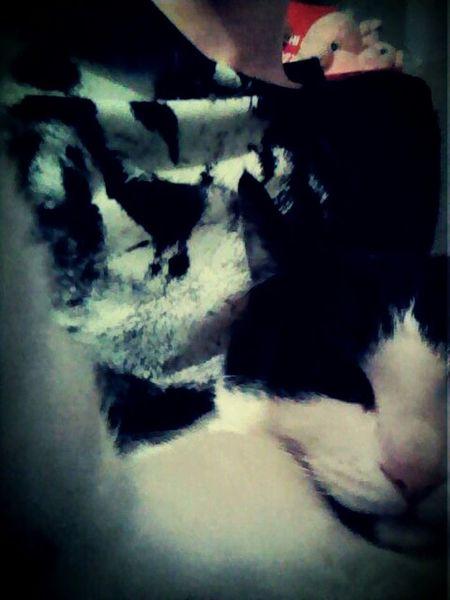 Selfiecat 🐱 Selfie ✌ Cat